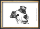 Robbie the Jack Russell Prints by Beth Thomas