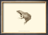Sepia Frog III Print by J. H. Richard