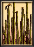 Mojave Prints by Robert Littleford