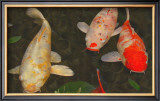 Green Rock Japanese Koi I Framed Giclee Print by  erichan