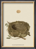 Antique Nest and Egg I Prints by Reverend Francis O. Morris