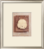 Seashell Study I Prints by Julie Nightingale