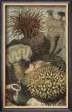Under the Sea II Prints