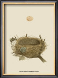 Antique Nest and Egg II Poster by Reverend Francis O. Morris