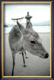 The Deer of Itsukushima Posters by Takashi Kirita