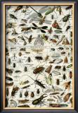 Insectes Art