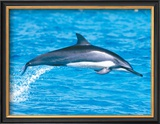Spinner Dolphins Framed Giclee Print by Michael S. Nolan