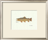 Brown Trout Art by Ron Pittard