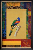 Australian Parrot Prints by Jaggu Prasad