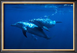 Dolphin Turn Prints by Charles Glover