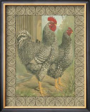 Roosters II Prints by  Cassell's Poultry Book