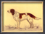 Hunting Dogs, Spaniel Poster by Andres Collot