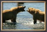 Kodiak Bear Alaska Conversation Framed Giclee Print by Charles Glover