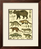 Oken Bear and Racoon Prints by Lorenz Oken