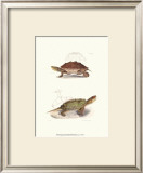Antique Turtles II Prints by J.W. Hill