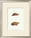 Antique Turtles I Poster by J.W. Hill