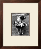 Tich and Pups Getting Around Print