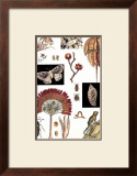Nature's Curio IV Posters