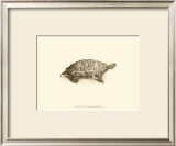 Sepia Turtle I Poster by J. H. Richard