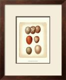 Bird Egg Study I Prints