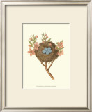 Antique Bird's Nest I Art by James Bolton
