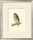Short Eared Owl Posters by Reverend Francis O. Morris