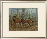 Deer Family II Poster by Ron Jenkins