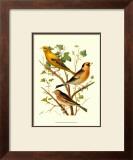 Domestic Bird Family VI Posters by W. Rutledge