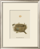 Antique Nest and Egg II Prints by Reverend Francis O. Morris