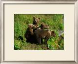 Alaska Kodiak Bear Cubs Framed Giclee Print by Charles Glover