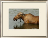 Moose Snack Time Framed Giclee Print by Charles Glover