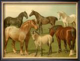 Horse Breeds II Print by Emil Volkers