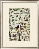 Arthropodes Prints