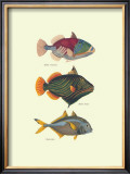 Tropical Fish Prints by J. W. Bennet & Couvier