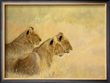Panthera Leo Prints by Danielle Beck