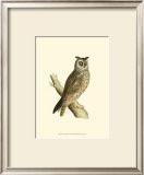 Long Eared Owl Prints by Reverend Francis O. Morris