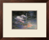 Swans and Waterfall Prints by T. C. Chiu