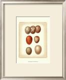 Bird Egg Study I Poster