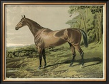 Cassell's Horse IV Print by  Cassell