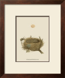 Antique Nest and Egg II Posters by Reverend Francis O. Morris
