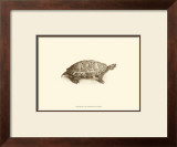 Sepia Turtle I Prints by J. H. Richard