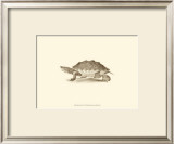 Sepia Turtle II Prints by J. H. Richard