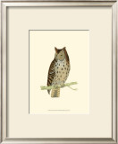 Mottled Owl Prints by Reverend Francis O. Morris