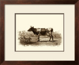 Bovine II Prints by Emile Van Marck