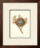 Antique Bird's Nest I Poster by James Bolton