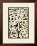 Arthropodes Print