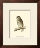 Short Eared Owl Art by Reverend Francis O. Morris