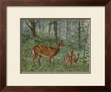 Deer Family I Print by Ron Jenkins