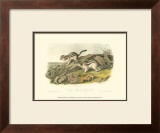 Marmot Squirrel Art by John James Audubon