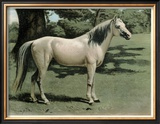 Cassell's Horse I Prints by  Cassell